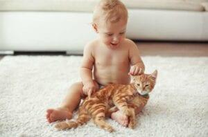 CBD Oil for Cats?