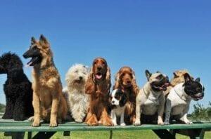 CBD Oil for Dogs?